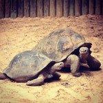 600lb turtles!
