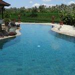 piscine avec vue sur rizières