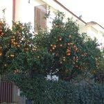 apelsinlunden!!