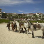 Horses out on the beach.