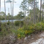 Big Lagoon State Park Hiking Trail