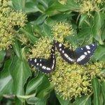 Mariposas en Paklenica