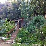 Cabin 12 A