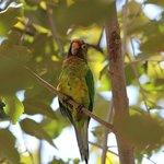 Pretty Parakeets.