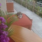 Condovac's 'timeshare kitty'.  Has to find a new owner each week!