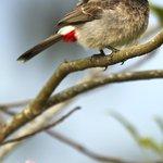 A bird on the garden