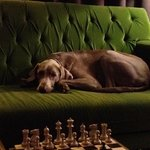 A beautiful dog hanging out in the lobby.  One wonders if he is hoping for a worthy chess oppone