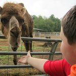 Reese feeding the Camel
