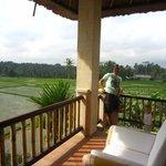 Rice fields next door