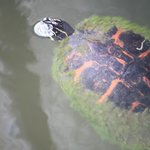 a turtle near the fishing pier