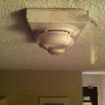 papier collant qui pend du plafond