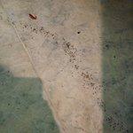 formiche in camera