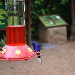 Hummingbird Feed area