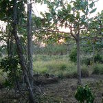 View from cabin porch at Finca Mystica