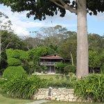 The garden Ceiba tree with view of La Casa de Don David