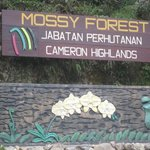 Entrance to the Mossy Forest