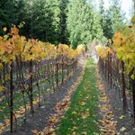 Spoiked Dog Winery in September - Gorgeous place!!!!
