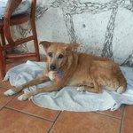 Venadita...senior watch dog