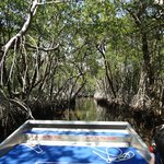 zooming through the mangroves