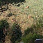 chevreuils au pied de la cabane le matin
