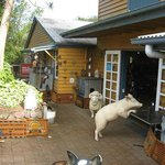 Flaxton Barn Cafe, Antiques and Gifts