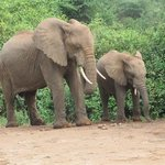 Elephant family crossing the road in Lake Manyara National park.