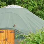 Little Owl on a Yurt