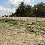 La bellissima spiaggia tanto rinomata di Flic e Flac  Villas Catolina  piena di sporcizia , vetr