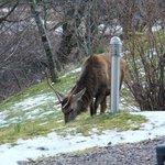 The deer outside the Inn