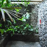 Rain Forest Shower