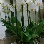 White orchids in the downstairs ladies' loo
