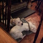 Dogs Welcome - And they appreciated the spot by the woodburner!