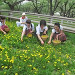 Our girls are picking up dandelion flowers in the Orchard