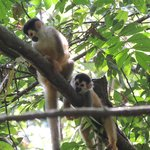 Squirrel Monkeys from a hike with Randall