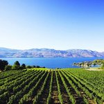 Tur & Mencicipi Minuman Anggur