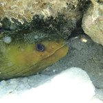 Green Moray just off the beach