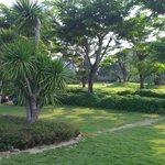 Spacious tropical garden