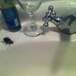 Roaches in the bathroom
