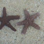 Lots of starfish on the beach