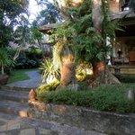 Jasmine Suite gardens