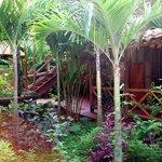 Jungle Courtyard