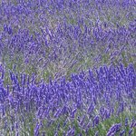 Photo of La Cigale en Provence