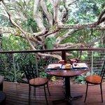 Breakfast by the tree