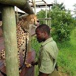 Cheetah Sylvester