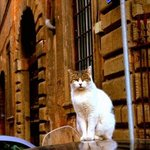 Cats in Trastevere