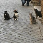 Cats in Trastevere Rome