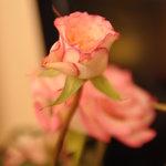 fresh flower in the room...:)