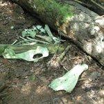 Moose Bones on the Greenstone
