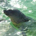 ecomare zeehonden opvang