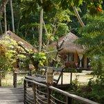 huisjes in de jungle